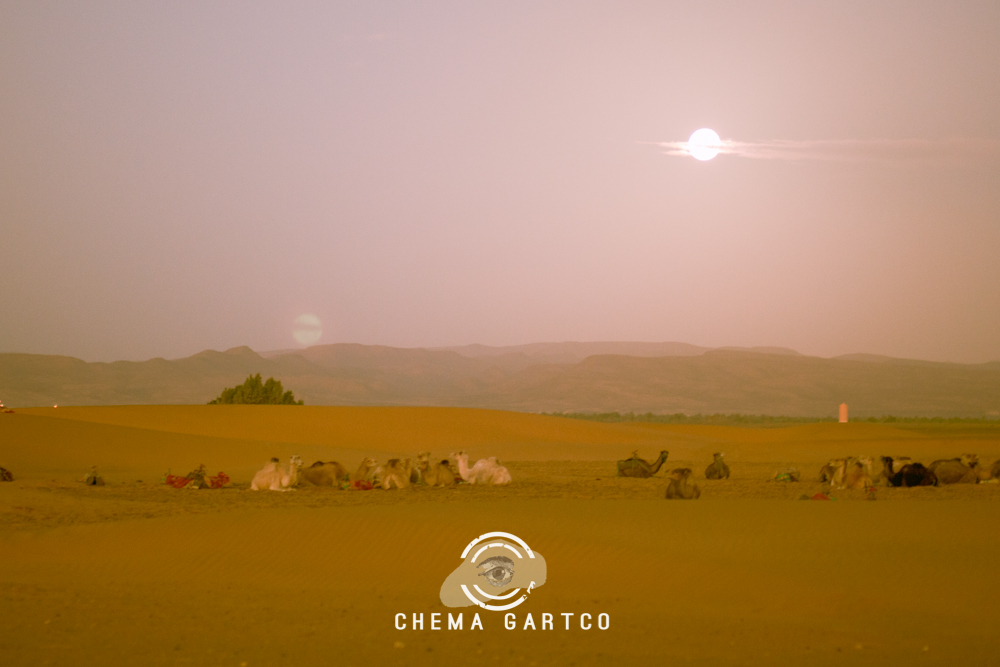 ChemaGartco-30